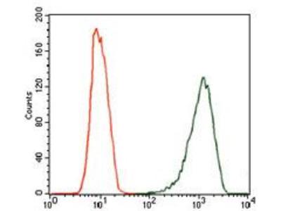 Anti-iNOS antibody [4E5]