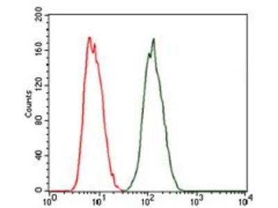 Anti-PKA C gamma antibody [2E4]