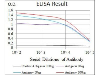 Anti-SRY antibody [1G4]