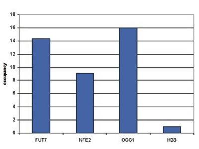 Anti-AML1-ETO antibody - ChIP grade