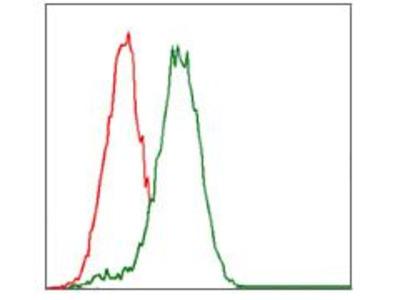 Anti-CYP3A4 antibody [3H8]