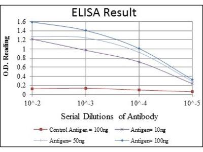 Anti-C/EBP beta antibody [3H9]