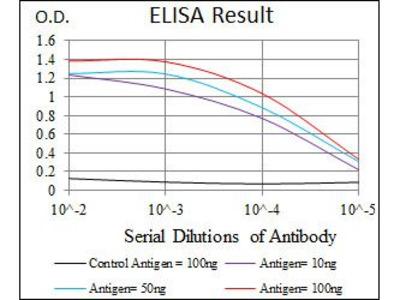 Anti-HSF4 antibody [2E7]