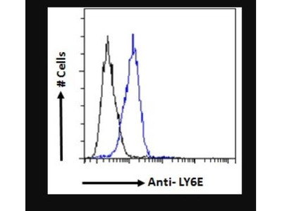 Ly-6E Antibody