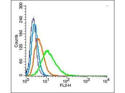 Kir2.1 antibody