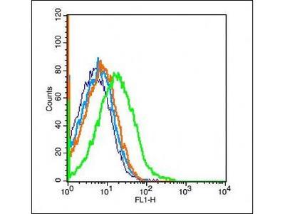 PEPT1 antibody