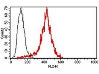 anti-Perforin 1 (Pore Forming Protein) (PRF1) antibody