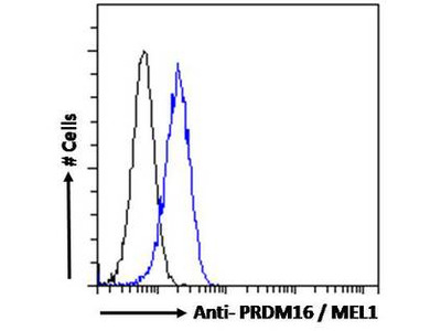 PRDM16 Antibody