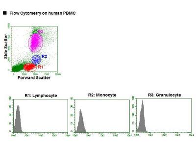 Anti-Podocalyxin (PCLP1) (Human) mAb-PE