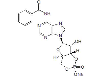 6 Bnz Camp Sodium Salt From Tocris Bioscience