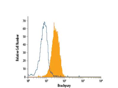 Brachyury APC-conjugated Antibody