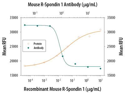 R-Spondin 1 Antibody