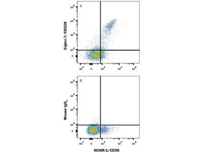 Siglec-7 / CD328 Antibody