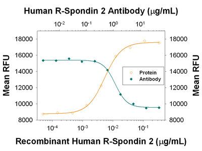 R-Spondin 2 Antibody