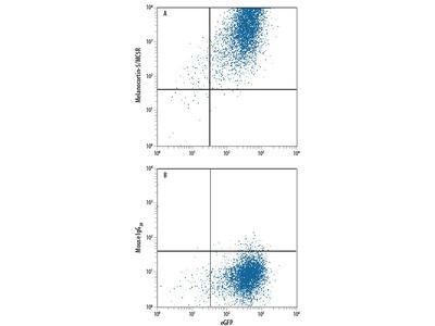 Melanocortin-5 R /MC5R Antibody