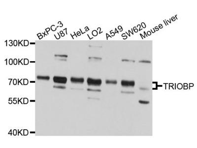 TRIOBP Polyclonal Antibody