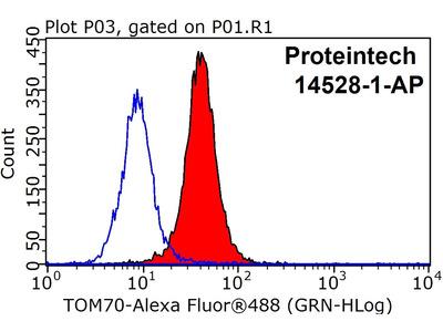 TOM70 antibody - KD/KO Validated