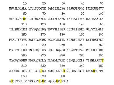 Recombinant Human Selenoprotein P