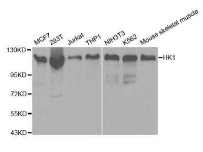 HK1 Polyclonal Antibody