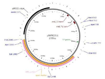 BPI cDNA Clone