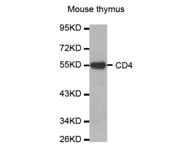 CD4 Antibody