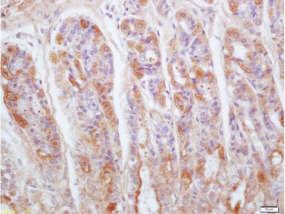 Gastrokine 1 Antibody, Cy3 Conjugated
