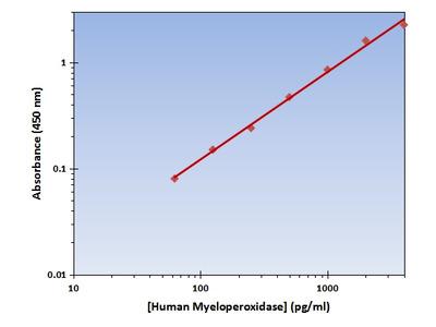 Myeloperoxidase ELISA Kit (Human) : 96 Wells (OKAG00238)