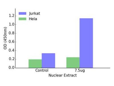 NCOR2 DNA-Binding ELISA Kit (OKAG00419)