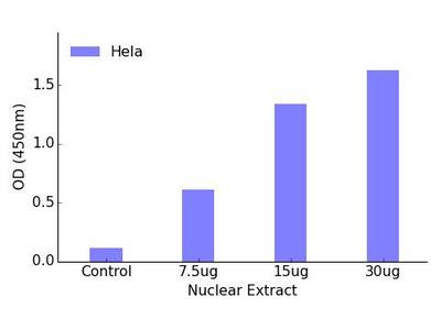FKHRL1 (Phospho-Ser253) DNA-Binding ELISA Kit (OKAG00310)