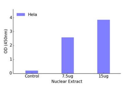 FOXK1 DNA-Binding ELISA Kit (OKAG00395)