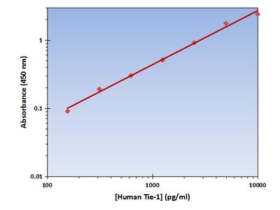 Tie-1 ELISA Kit (Human) : 96 Wells (OKAG00256)