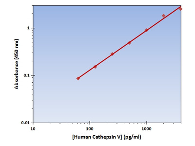 Cathepsin V ELISA Kit (Human) : 96 Wells (OKAG00201)