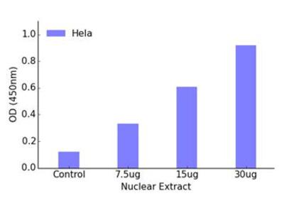 FOXH1 DNA-Binding ELISA Kit (OKAG00392)