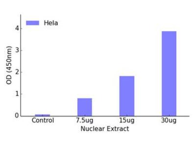 CREB DNA-Binding ELISA Kit (OKAG00369)