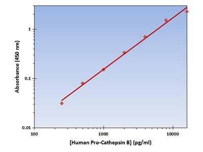Pro-Cathepsin B ELISA Kit (Human) : 96 Wells (OKAG00242)
