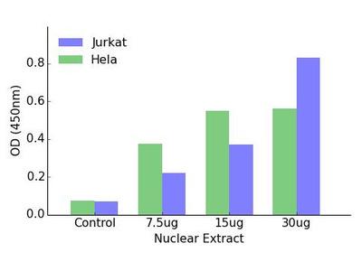 GATA1 (Phospho-Ser142) DNA-Binding ELISA Kit (OKAG00311)