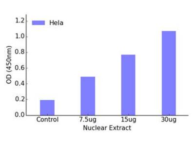 FOXC1/2 DNA-Binding ELISA Kit (OKAG00390)