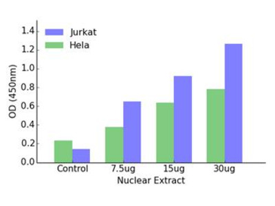HOXD12 DNA-Binding ELISA Kit (OKAG00408)