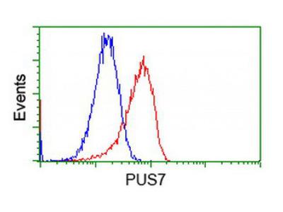 PUS7 antibody