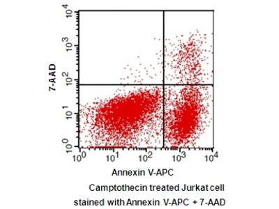 Annexin V-APC / 7-AAD Apoptosis Detection Kit