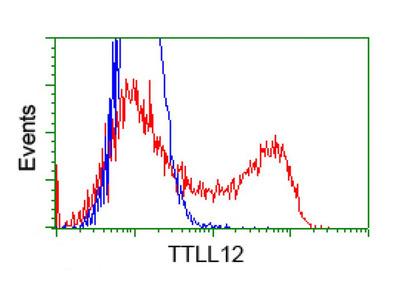 TTLL12 antibody