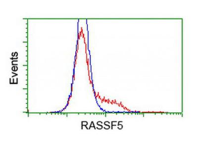 RASSF5 antibody