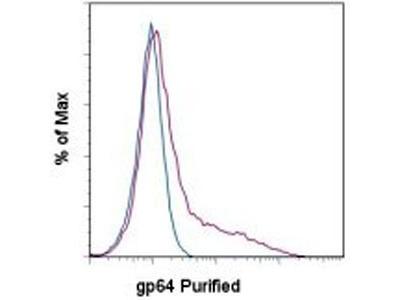 gp64 protein antibody