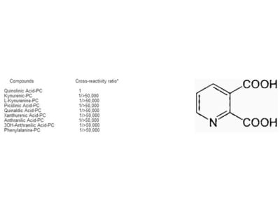 Polyclonal anti-conjugated quinolinic acid antibodies