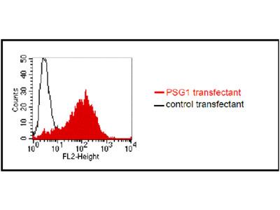 anti-human Pregnancy-specific-protein (PSG) monoclonal antibody