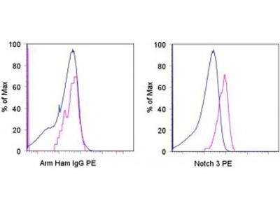 Notch 3 antibody (PE)