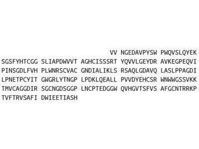 Recombinant Elastase 3B (ELA3B)