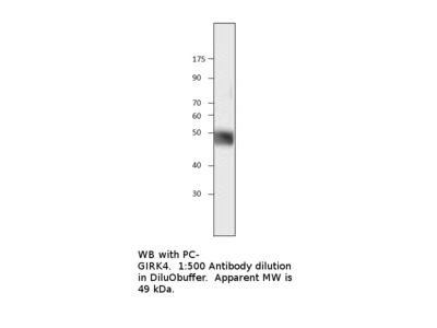 G Protein avtivated K channel 4