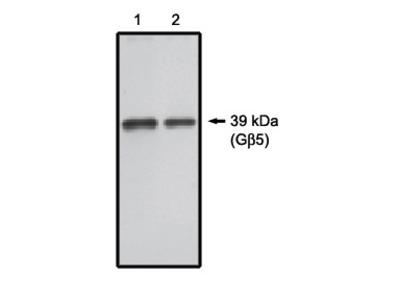 G 5-D1