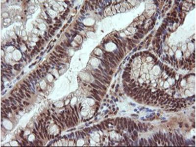 NDOR1 Monoclonal Antibody